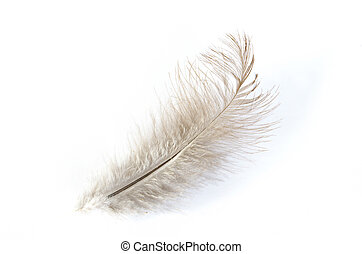 feather isolated on white background