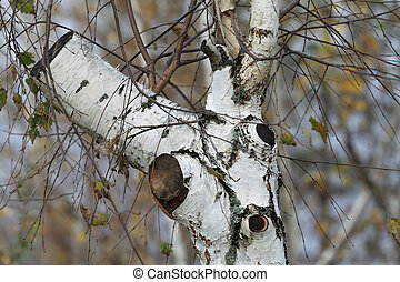 Lopped birch. - Looping birch tree in autumn.