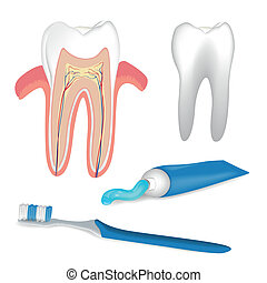 Dental Care Elements - Vector Illustration of Dental Care...