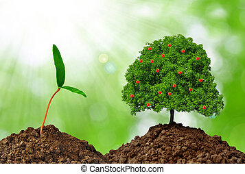 Growing apple tree on green background