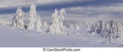 höjande,  Mountains, Snö, träd, rimfrost