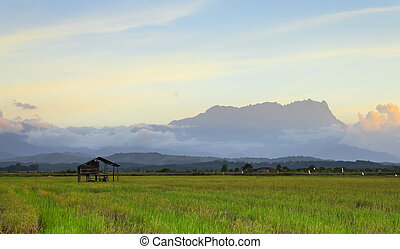 paddy field in Sabah, Malaysia - A view of a paddy field in...