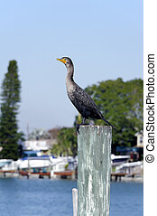 Cormorant in Fishing Town