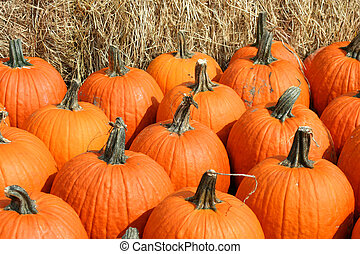 Bunch of pumkins in front of hay bails - A Bunch of pumpkins...