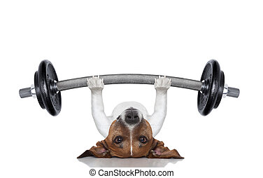 personal trainer dog - fitness dog lifting a heavy big...