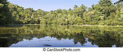 Beautiful northwoods scene of trees reflecting on the Paint...
