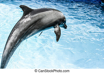 dolphins swim in the pool