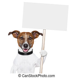 banner dor - dog holding an empty placard and licking empty...