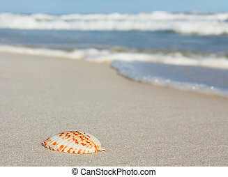 Seashell on beach in Florida