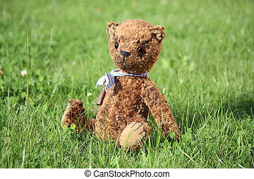 Cute brown teddy bear in the garden in summer