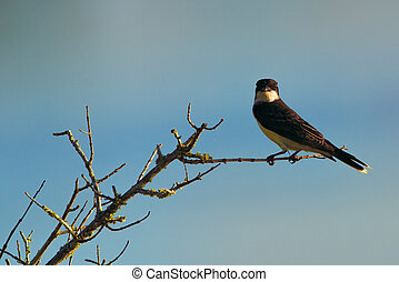 Bird perched on tree branch with blue sky background