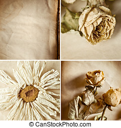 Dry flowers  Collage