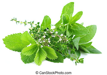 Fresh green herbs - Fresh herbs bouquet isolated on white...