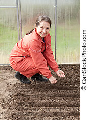 woman  sows seeds in soil at hothouse