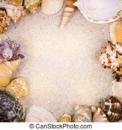 Sea shells with sand as background - Many sea shells with...