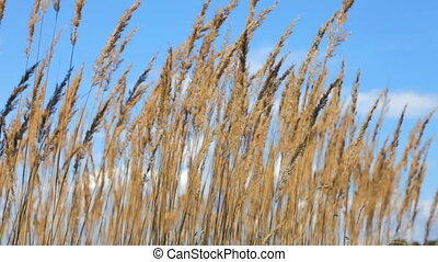 Reed on Lake