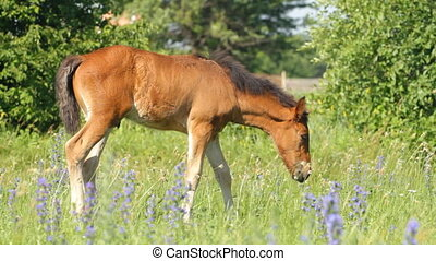 Beautiful foal on a meadow