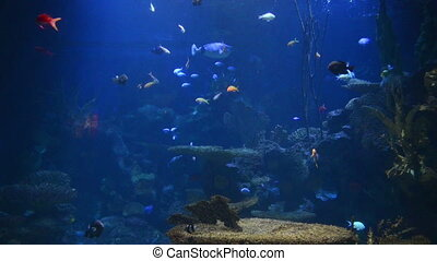 Tropical fish near coral reef with blue ocean water