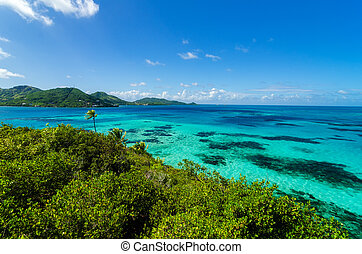 Jungle and Turquoise Water - View of jungle and turquoise...