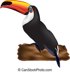 Toucan - Vectorial illustration of an orange-billed toucan