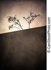 Artistic Trees - Artistic image of desert trees against a...