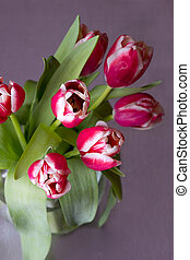bouquet of red tulips - tulips. bouquet of red flowers. on a...