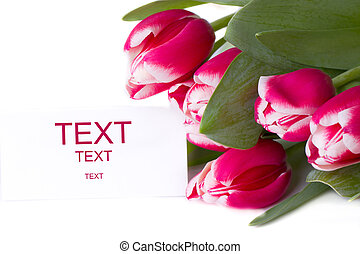 Bouquet of red tulips. isolated on white background