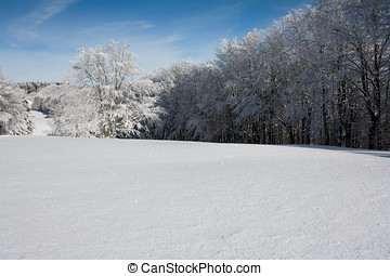 Snow landscape with frozen trees