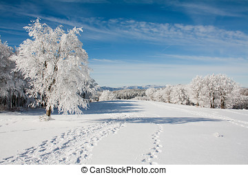 Snow landscape with frozen tree and traces on the snow