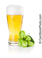 Glass of fresh beer with Green hops isolated on a white...