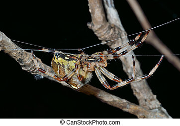 Spider on spider-web 31 - A close up of the spider on...