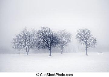 Winter trees in fog - Winter scene of leafless trees in fog