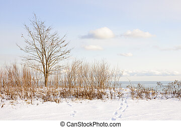 Winter shore of lake Ontario - Snowy shore of lake Ontario...