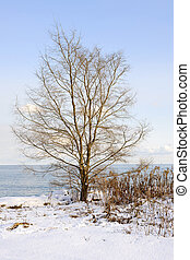 Winter tree on shore - Single tree on snowy winter shore of...