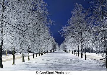 Winter Alley With Snowy Trees In The Night