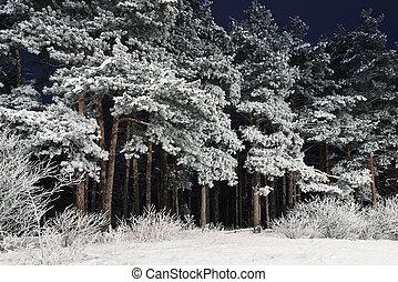 bosque, en, noche