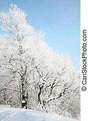 Snow tree on blue sky background
