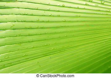 green leaf - a green palm leaf with water drops