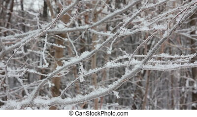 winter tree branch and snow