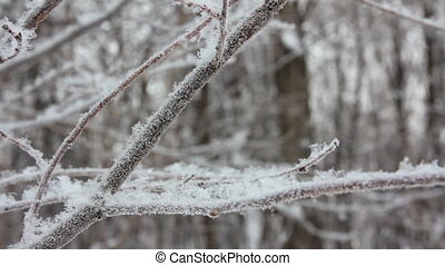 winter tree branch and snow close-up