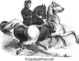 Man riding horses - Old engraving of a man riding two horses