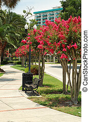 Crape Myrtles along a walkway at Lake Lucerne