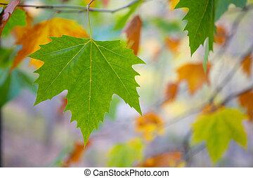 Outono, folhas, árvore, fundo, outono