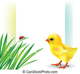 Grass and baby chick background.Contains transparent...
