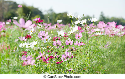 fresh flower - flower garden , field of beautiful floral