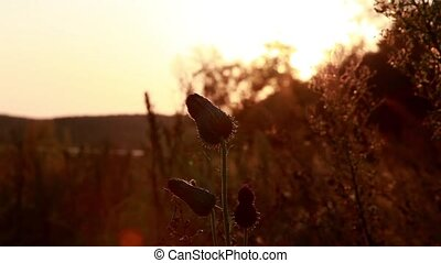 Swamp flower shot against the sunset