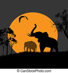 Silhouette view of elephants at night