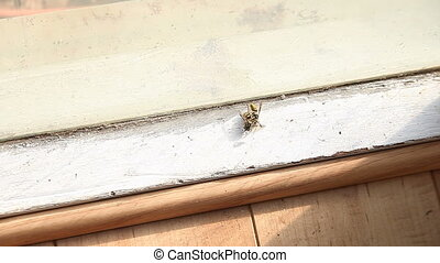 yellow jackets - a yellow jacket wasp struggles to move a...