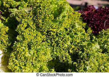 endive lettuce vegetables green and purple food textures