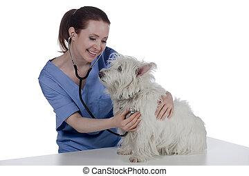 a happy veterinarian examining the dog